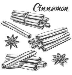 cinnamon seasoning ingredient for cooking food vector image