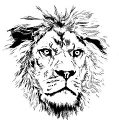 Lion with little mane vector