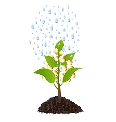 Money plant with rain drops vector image