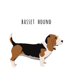 Simple basset hound realistic vector