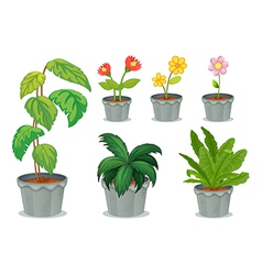 Six pots with plants vector image