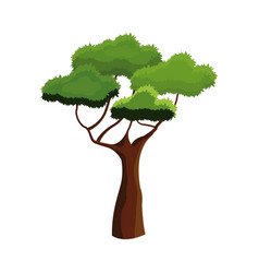 african tree foliage high ecosystem over white vector image
