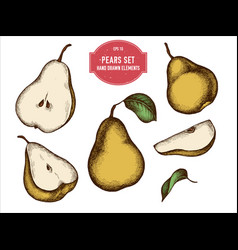 collection of hand drawn colored pears vector image