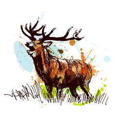 Colored hand sketch deer vector