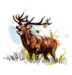 Colored hand sketch deer vector image