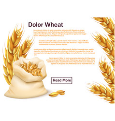 Realistic wheat grains and ears isolated on white vector