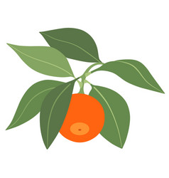 tangerine with leaves isolated on white background vector image