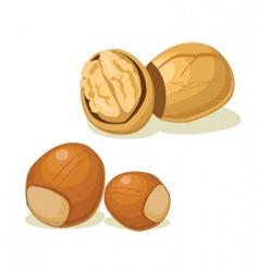 hazelnut walnut vector image