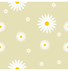 Camomile background vector