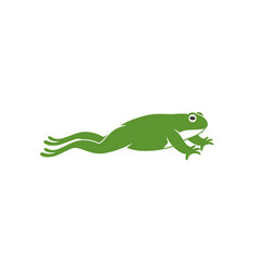 frog jumping vector image