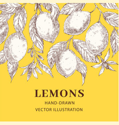 lemons hand drawn sketch poster template vector image