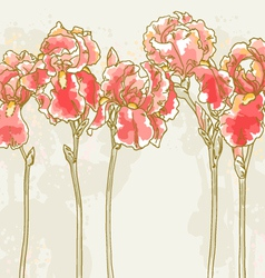 background with red iris flowers vector image vector image