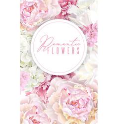 peony pink banner vector image vector image