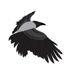 raven image isolated on white background vector image