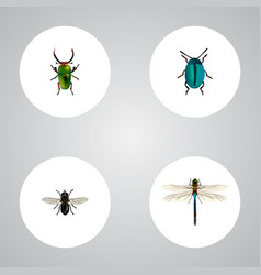 Realistic midge insect damselfly and other vector
