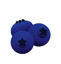 blue berry vector image vector image