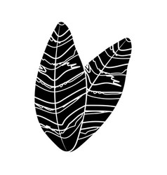 contour beautiful leaves of the exotic plants in vector image