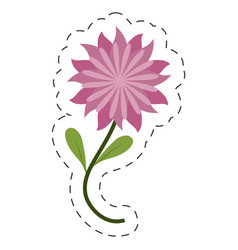 Flower aster decoration image cut line vector
