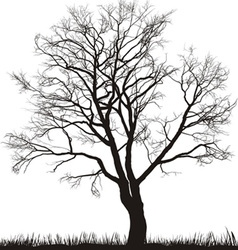 walnut tree in winter vector image