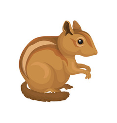 Chipmunk wild rodent animal on vector