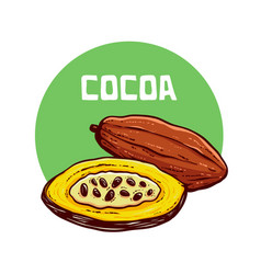 cocoa fruit hand drawn vector image