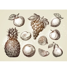 Collection fruits sketch Hand-drawn elements such vector image vector image