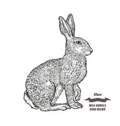 Forest animal hare or rabbit hand drawn black ink vector