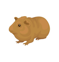 Cute cavy small rodent animal vector
