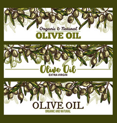 Extra vrigin olive oil sketch banners vector