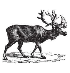 Reindeer vintage vector