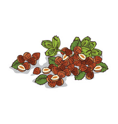 Isolated clipart hazelnut vector