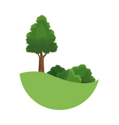 tree landscaping bush environment plant image vector image