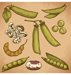 engraving beans and peas retro vector image