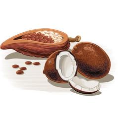 Exotic fruit coconut cocoa vector
