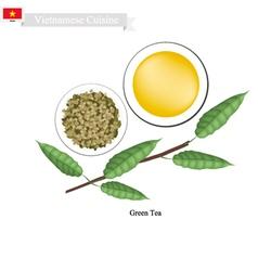 Fresh Mango A Famous Fruit in Vietnam vector image