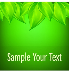 Green background with leaves vector image