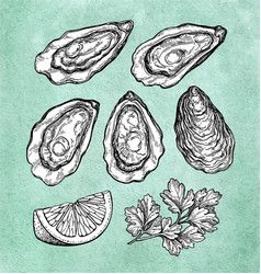 Oysters with lemon and parsley vector