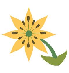 Plumeria flower decoration image vector