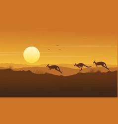 beauty scenery kangaroo silhouette collection vector image vector image