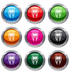 tooth cross section set 9 collection vector image vector image