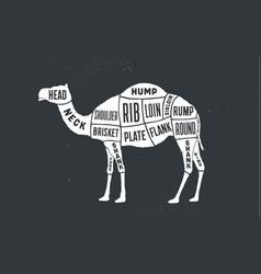 Camel dromedary butcher guide scheme vector