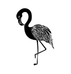 Contour beauty and exotic flamingo bird animal vector