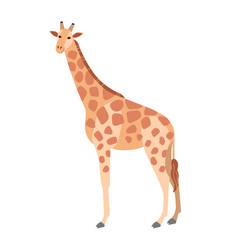 Cute giraffe isolated on white background vector