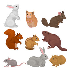 Cute rodents set small wild and domestic animals vector