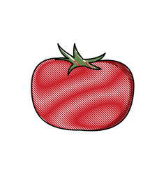 Draw tomato vegetable nutrition vitamin food vector
