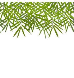 Bamboo seamless horizon border vector