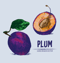 digital detailed color plum hand drawn vector image