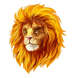 Head of a lion EPS10 vector image