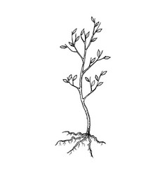 Seedling tree sketch vector