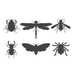 set hand drawn insects different insects vector image
